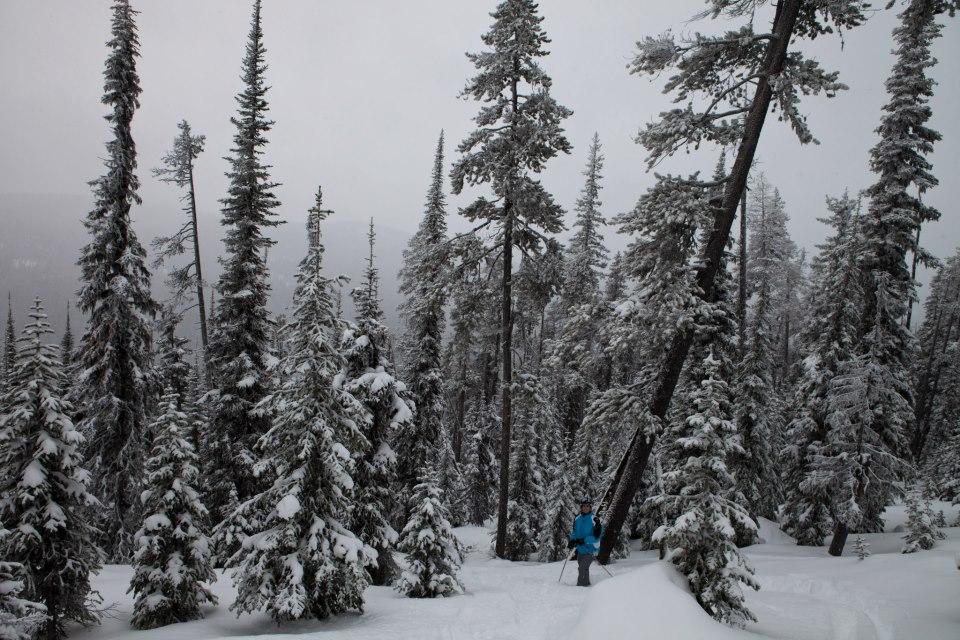 Among the trees and fresh powder at Big White resort.